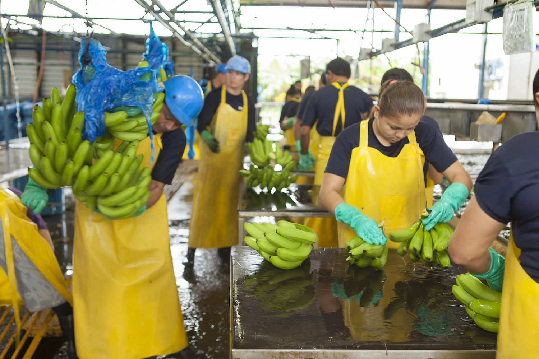 Chiquita en Shazam gaan voor duurzaamheid met innovatieve sticker